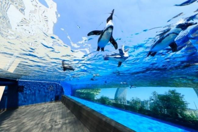 展望台から水族館、プラネタリウムまである「サンシャインシティ」