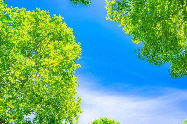 オススメの暇つぶし:自然に触れる系