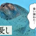 古文単語「うし/憂し」(形容詞ク活用)の意味と覚え方を解説!