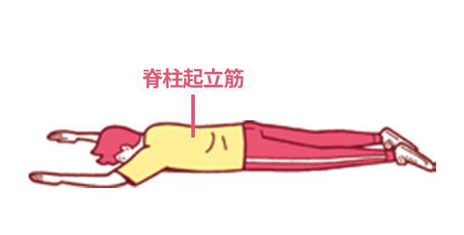 1.うつ伏せになり背中の中心にある 脊柱起立筋を意識し、手足を伸ばす