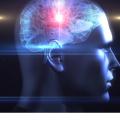 広告や商品開発にも使える!「脳科学」ってどんな学問?